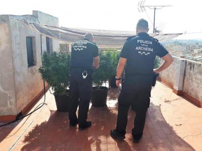 La Policía Local de Archena incauta una plantación de cultivo de marihuana
