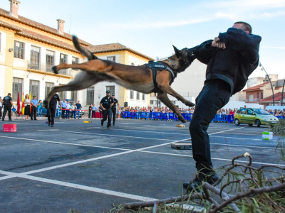 Espectacular y multitudinaria la 'I Exhibición Nacional de perros de trabajo policial' celebrada en Archena en la noche de ayer